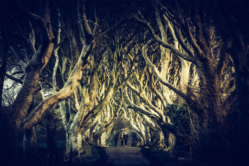 800-GOT-dark hedges