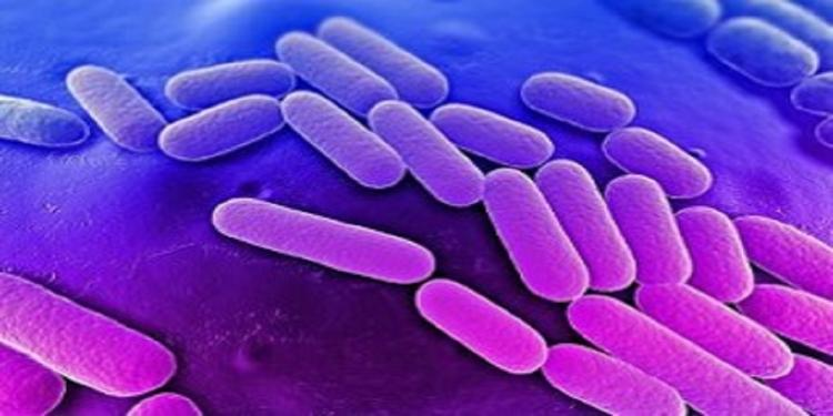 News Article Klebsiella Pneumoniae