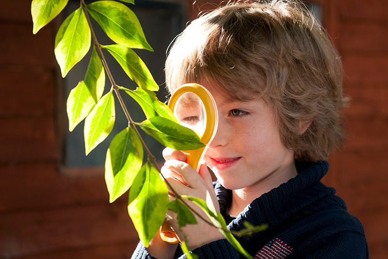 Boy using a magnifying glass to look at a leaf