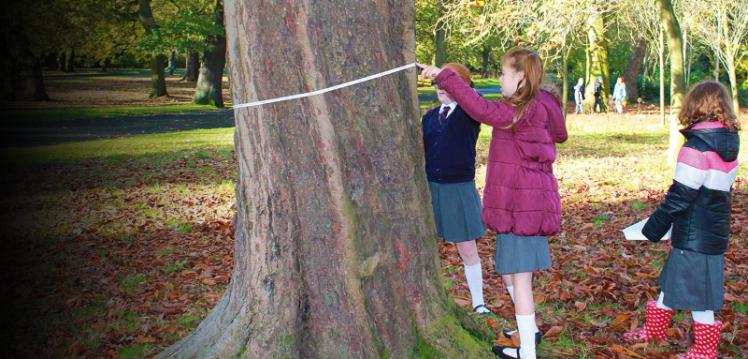 three schoolgirls in a park in autumn measuring the diameter of a tree with a measuring tape.