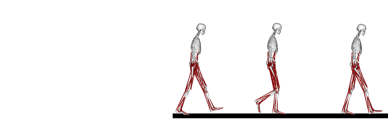 Simulation models of humans walking