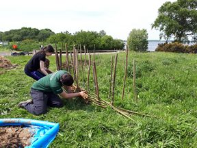 Making a wattle-and-daub fence