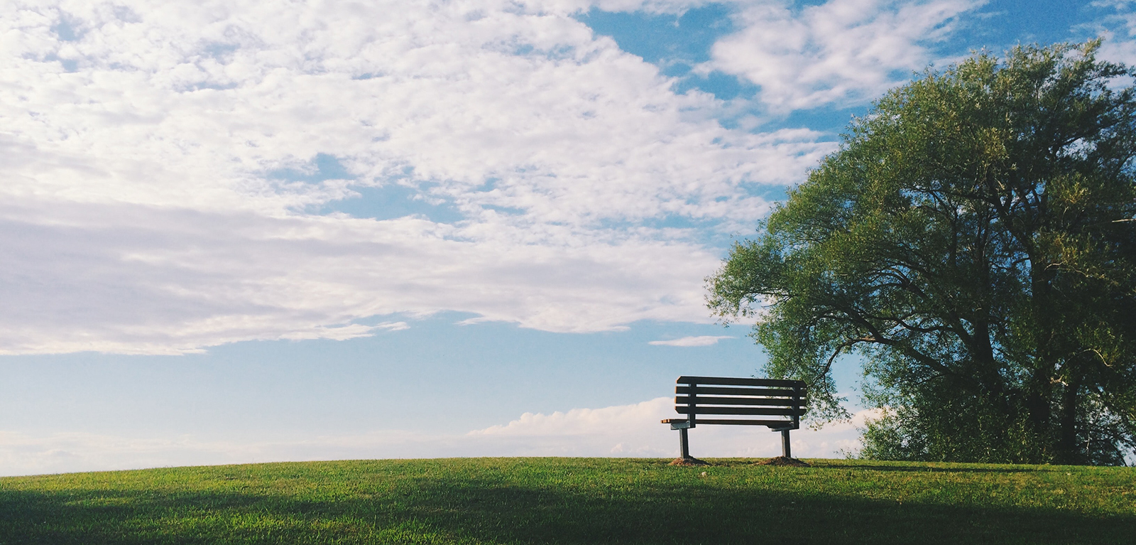 Bench on a hill under a tree