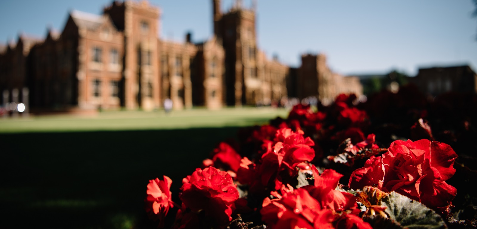 Red flowers in foreground with front of Lanyon Building blurred in background